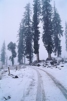 Snow at Solang , Manali , Himachal Pradesh , India