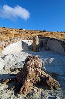 Petrified forest, Lesvos island, Greece
