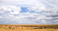 Savannah grassland with Wildebeest Zebra and antelopes in the Masai Mara National Nature Reserve Kenya East Africa