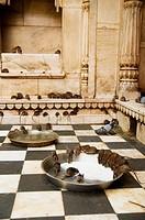 Rats drink milk inside the Karni Mata temple in Deshnoke, India  Rats are honored here