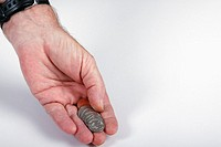 Coins in the palm of a man's hand  Isolated  Copy space