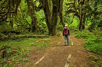 Hiker in Hoh Rainforest, Olympic national park