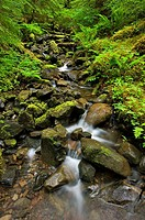 Olympic national park - spring rainforest