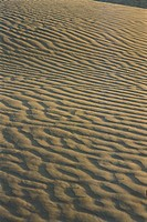 Sam sand dunes , Jaisalmer , Rajasthan , India