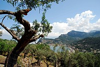 Olive grove and panorama of the landscape, bay of Puerto Soller, Port de Soller, Mallorca, Majorca, Balearic Islands, Mediterranean Sea, Spain, Europe