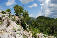 At the mountain, Penyal d´ Honor near Bunyola, Mallorca, Majorca, Balearic Islands, Spain, Europe