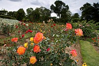 Europa Rosarium in Sangerhausen, the largest collection of roses in the world, Saxony_Anhalt, Germany, Europe