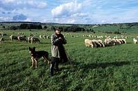 Shepherd in Hochrhoen, Nahe Gersfeld, Rhoen, Hesse, Germany