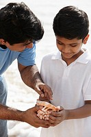 Father and son looking at sea shell together