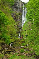 Wales, Powys, Near Llanrhaeadr_ym_Mochnant, Pistyll Rhaeadr Waterfalls Near Llanrhaeadr ym Mochnant. At 240ft 80m high it is the UK tallest single dro...