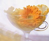 Yellow flowers arranged in a glass tea cup