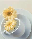Two flowers and a coffee cup, saucer and plate