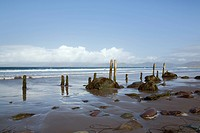 Republic of Ireland, County Kerry, Rossbeigh, Wooden posts and stones on wet sand on an empty beach at Ross Strand, west of Ross Behy on Ring of Kerry...