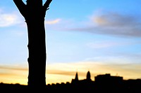 Republic of Ireland, County Cork, Central Cork, Silhouette of a tree by the River Lee in Cork.