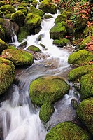 happy valley, oregon, united states of america, green moss on the rocks along a small waterfall