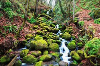 happy valley, oregon, united states of america, green moss along a small waterfall