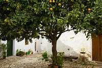 castellar de la frontera, andalusia, spain, a fruit tree in the street