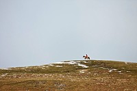 northumberland, england, a person riding on a horse at the top of a hill with traces of snow