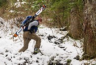 A backcountry skier hikes through the Southeast Alaska rainforest to with skiis and gear on a pack, Southeast Alaska