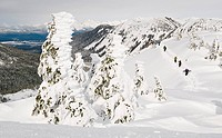Backcountry skiers climb a hill with rime ice covered tree in the foreground at the Eaglecrest Ski area, Juneau Alaska