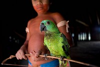 Parrots are favoured pets for the Xingu Indians in the Amazone, Brazil