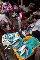 The famous fish market of the harbour city of Busan in the south of the Republic of South Korea