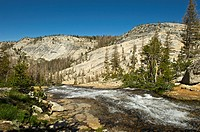 Fletcher Creek, Yosemite National Park, California, USA