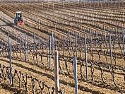Tractor labrando en unos viñedos en invierno en el Villar de Álava - Rioja Alavesa - Álava - País Vasco - Euskadi - España