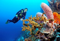 Diver views sponges and some coral on a reef, Bonaire Island, Netherlands Antilles, Caribbean