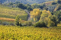 europe, italy, tuscany, chianti, vineyards