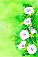 Flower, Watercolor painting of petunia
