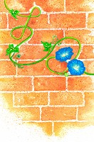 Flower, Watercolor painting of flowers on the wall