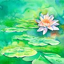 Flower, Watercolor painting of lotus and leaves