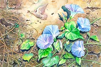 Animal, Watercolor painting of petunia and a flying dove on the wall