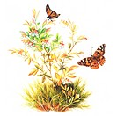 Insects, Watercolor painting of two butterflies flying near flowers