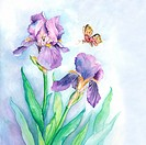 Insects, Watercolor painting of a butterfly flying above flowers