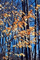 Forest in late fall with bright blue sky