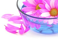 Close up of pink flower blossoms floating in water
