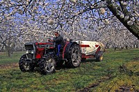 PESTICIDE TREATMENT IN A CHERRY TREE ORCHARD, LOIRET 45