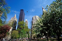 FLOWERING TREES, MADISON SQUARE, MANHATTAN, NEW YORK, USA