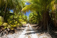 Coconut Palms at Bikini, Bikini Atoll, Micronesia, Pacific Ocean, Marshall Islands