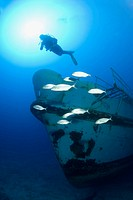 Diving at Wreck MV Karwela, Mediterranean Sea, Gozo