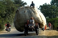 India, Haryana, hay carriage