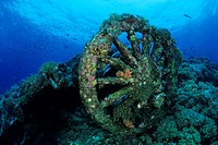 Railway Wheel of Numidia Wreck, Brother Islands, Red Sea, Egypt