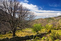 Fencing in the Tejea Throat Sierra de Gredos Ávila Castilla León Spain