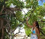 Tourist takes a photo from juvenile Booby in his Nest, Sulidae, Ngulu Atoll, Caroline Islands, Pacific, Yap, Micronesia