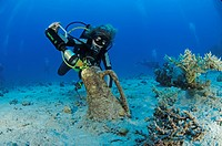 Scuba Diver discover Amphora of Roman Ship Wreck, Red Sea, Egypt