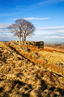 Top Withins Haworth Moor West Yorkshire England