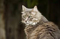 cat _ portrait