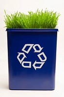 Grass in a Recycling Bin